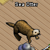Pets-Sea otter.png