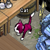 Pets-Wine cat.png