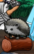 Portrait-item-Hedgehog.png