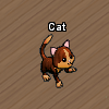 Pets-Chocolate cat.png