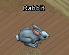 Pets-Rabbit.png