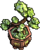 Furniture-Bonsai-6.png