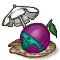 Trophy-Beach Plum.png