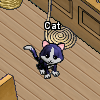 Pets-Shadow cat.png